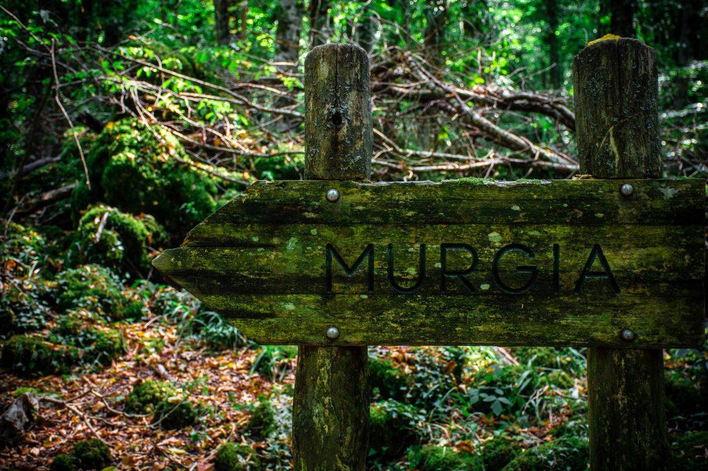 sentiero della foresta umbra