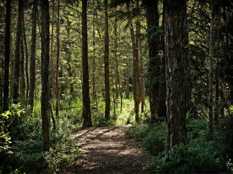 pineta trekking nella natura