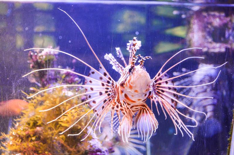 pesce colorato nel museo dell'acqua a stoccolma