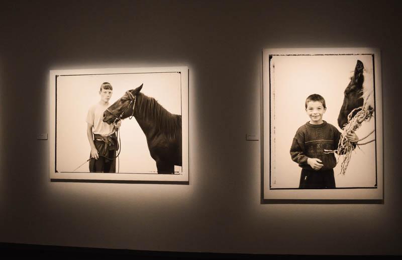quadri con cavalli del museo fotografiska a stoccolma