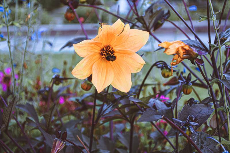 fiori a vigeland park