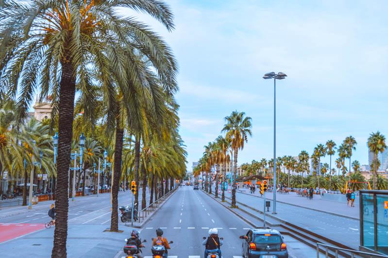 barceloneta strada con palme