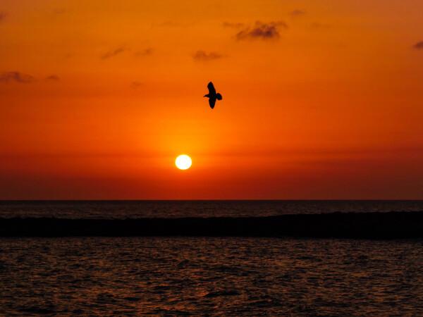 tramonto a gallipoli gabbiano